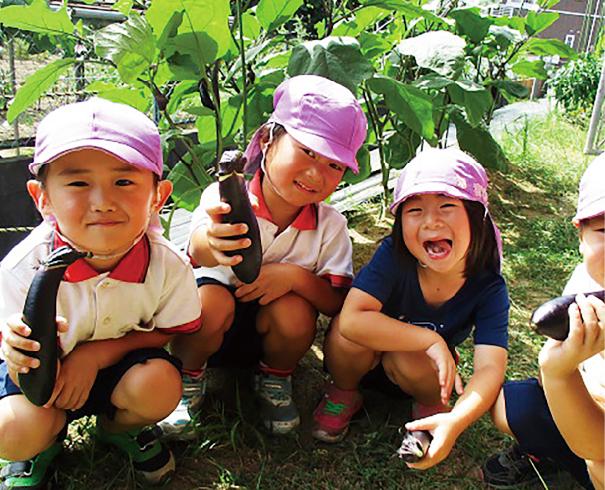 立派に育ったナスを収穫。自分で育てるとおいしさも倍増!
