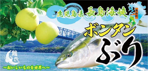 鹿児島は長島の(有)鶴長水産が養殖している「ボンタンぶり」。